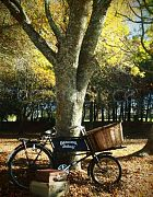 Bicycle Vintage W/Basket Large