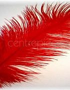 Ostrich Feather Red Large