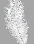Ostrich Feather White Small